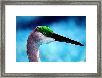 Framed Print featuring the photograph The Sandhilll Crane  by Marty Gayler
