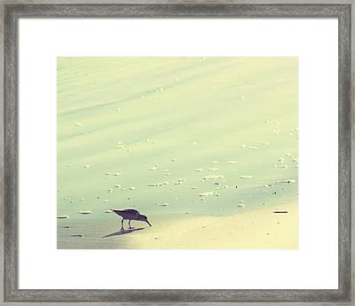 The Sandpiper Framed Print by Amy Tyler