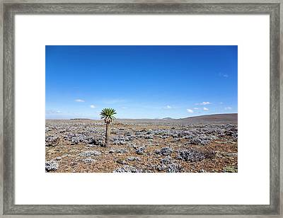 The Sanetti Plateau, Bale Mountains Framed Print by Martin Zwick