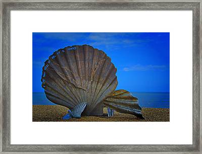 The Scallop Framed Print