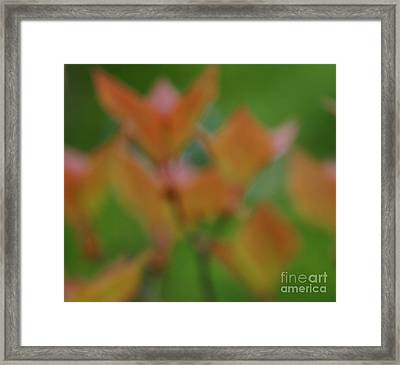 The Scent Of Mountain Flowers Framed Print by Julian Cook