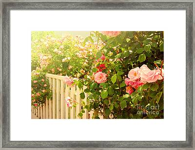 The Scent Of Roses And A White Fence Framed Print