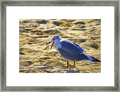 The Seagull And His Sand-crusted Fish 1 Of 3 Framed Print