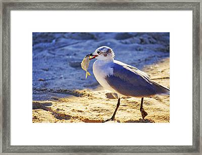 The Seagull And His Sand-crusted Fish 2 Of 3 Framed Print