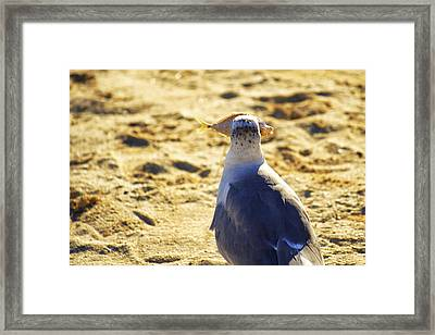 The Seagull And His Sand-crusted Fish 3 Of 3 Framed Print