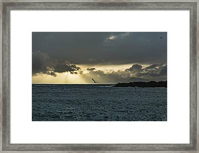 The Seagull Framed Print
