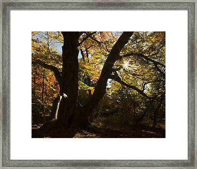 Framed Print featuring the photograph The Secret Forest by Jose Oquendo