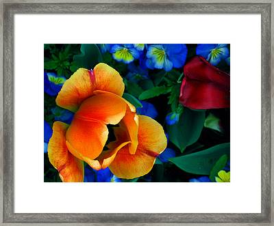 The Secret Life Of Tulips Framed Print by Rory Sagner