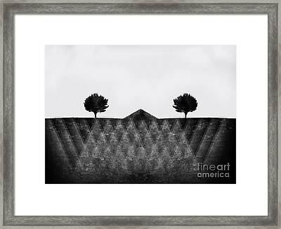 The Secret Lives Of Two Trees Framed Print by Linda Matlow