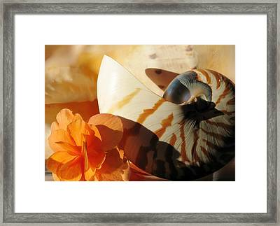 The Secret Of The Sea Framed Print by Angela Davies