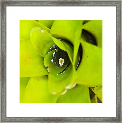 The Secret World In A Bromeliad Framed Print