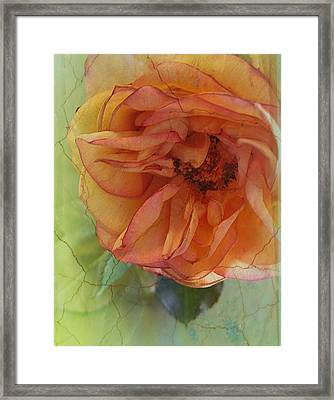 The Sensitive One Framed Print by Shirley Sirois