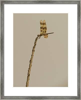 The Sentinel Framed Print by Tim Good