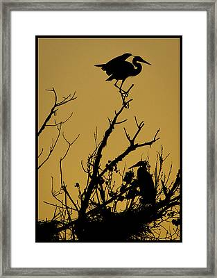 The Sentry Framed Print by Kelly Gibson