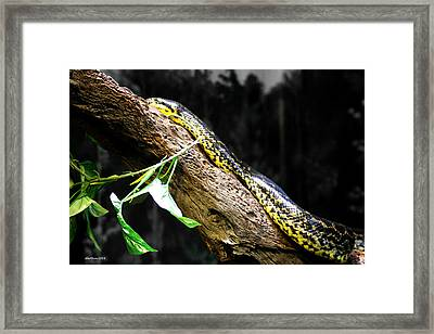 The Serpent Framed Print by Dick Botkin