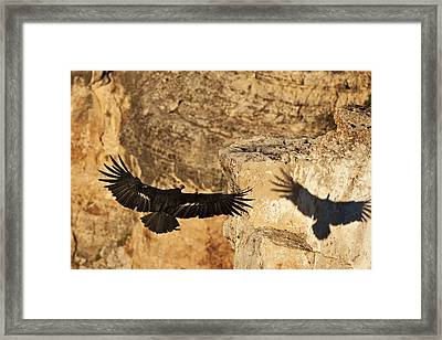 The Shadow Of The King Framed Print by Kiril Kirkov