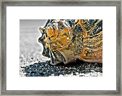 The Shell On The Sand Framed Print