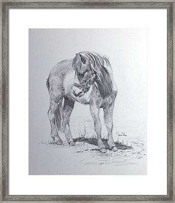 The Shetland Framed Print by James Skiles