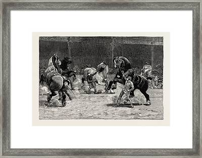 The Shire Horse Show At The Agricultural Hall Framed Print by English School