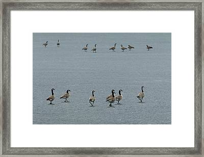 The Showdown Canada Geese On Ice Framed Print by Tom Reichner