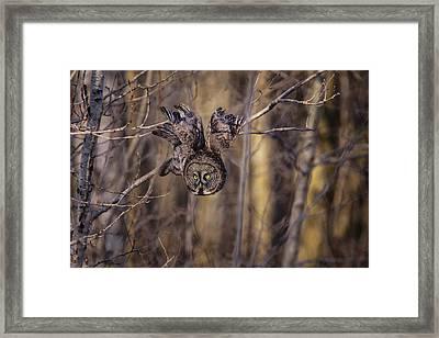 The Silent Hunter Framed Print