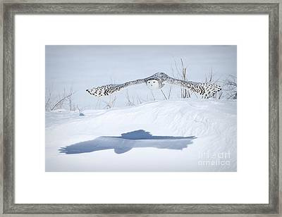 The Silent Hunter Framed Print by Heather King