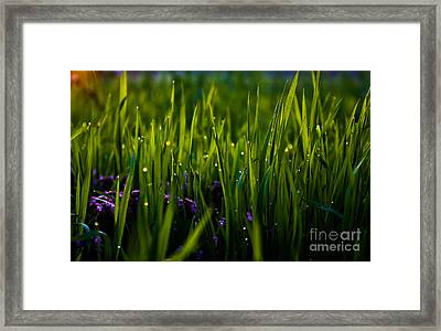 The Simple Things Framed Print by Everett Houser