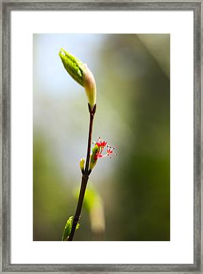 The Simpler Things Framed Print by Alex Wrenn