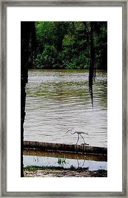 The Single Flyer Framed Print by Robin Lewis