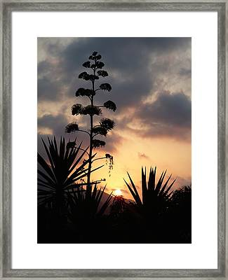 Framed Print featuring the photograph The Sky by Janina  Suuronen
