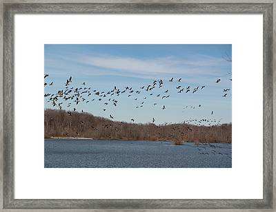 The Skycatchers Framed Print by Frederic Vigne