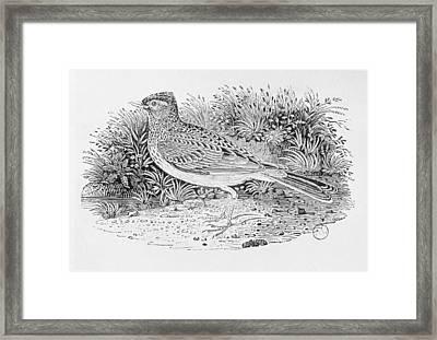 The Skylark Alauda Arvensis From The History Of British Birds Volume I, Pub. 1797 Wood Engraving Framed Print by Thomas Bewick