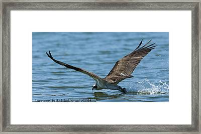 The Slide  Framed Print by Glenn Lawrence