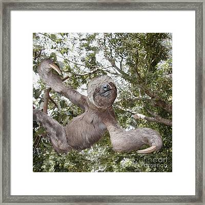 The Sloth  A Real Tree Hugger Framed Print
