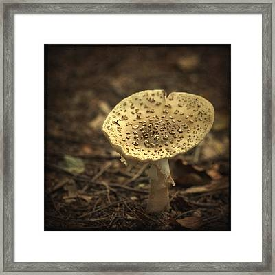The Slow Passing Of Autumn Framed Print by Evelina Kremsdorf