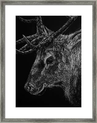 The Sly Elk Framed Print by Nathan Cole