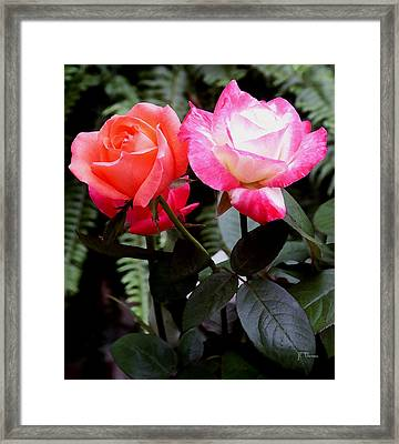 Framed Print featuring the photograph The Smell Of Roses by James C Thomas