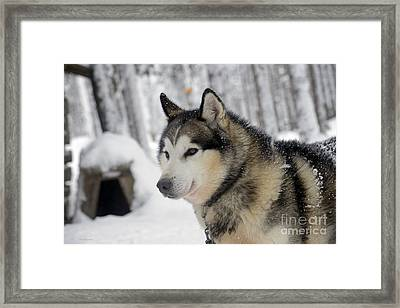 The Smile Of A Queen Framed Print by Arik Baltinester