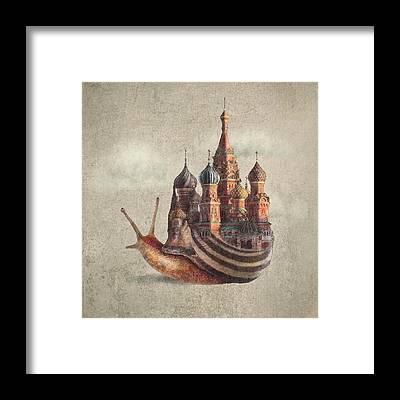 Snail Framed Prints