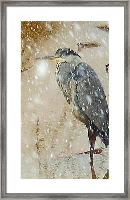 The Snow Bird Framed Print