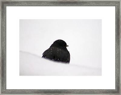The Snow Thinker Framed Print