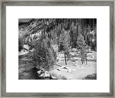 The Snow Tree's Framed Print