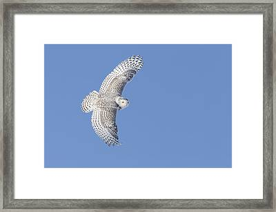 The Snowy Hunter Framed Print by Mircea Costina Photography