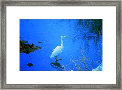 The Snowy White Egret Framed Print