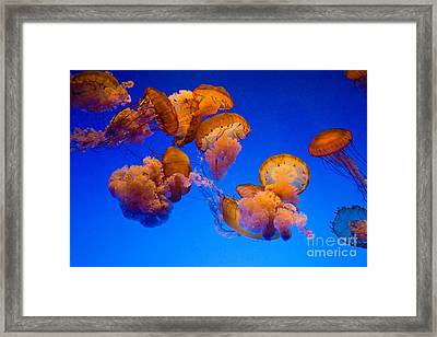 The Social Framed Print