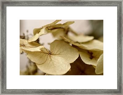 The Soft Whisper Of Petals Framed Print