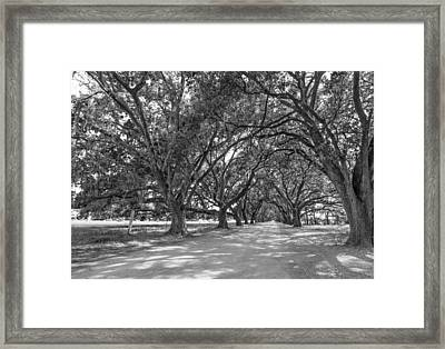 The Southern Way Bw Framed Print by Steve Harrington