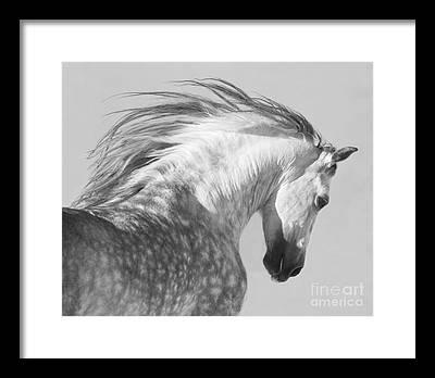 Stallion Framed Prints