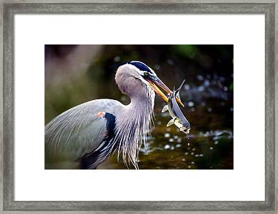 The Spear Framed Print