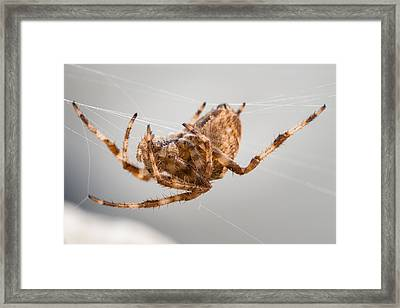 The Spectacular Spider Iv Framed Print by Marco Oliveira